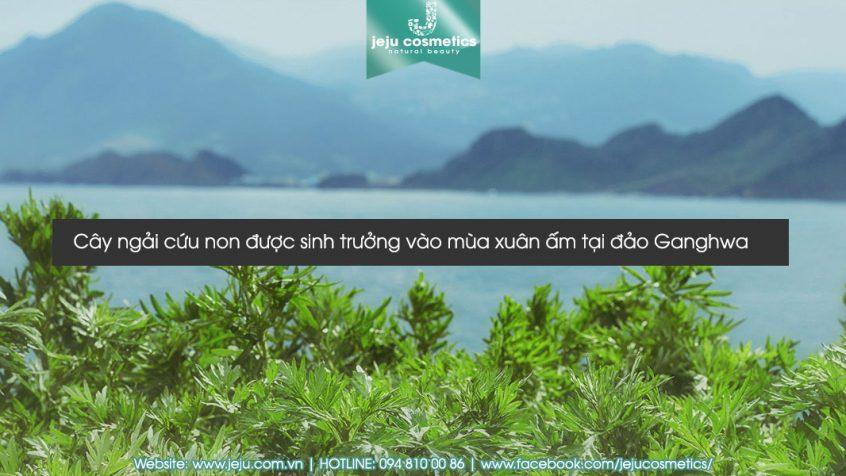 kem-duong-da-dang-gel-hanyul-pure-artemisia-watery-calming-gel-250ml-4