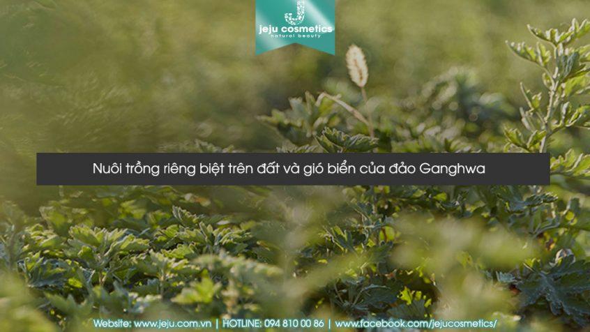 kem-duong-da-dang-gel-hanyul-pure-artemisia-watery-calming-gel-250ml-5