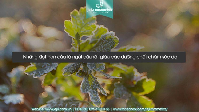 kem-duong-da-dang-gel-hanyul-pure-artemisia-watery-calming-gel-250ml-6