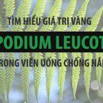 Polypodium Leucotomos – Giá Trị Đắt Giá Trong Mỗi Viên Uống Chống Nắng